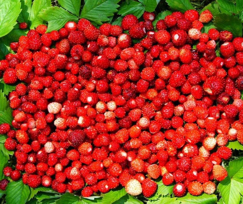 Domaće slatko od šumskih jagoda